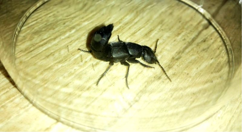 eng insect