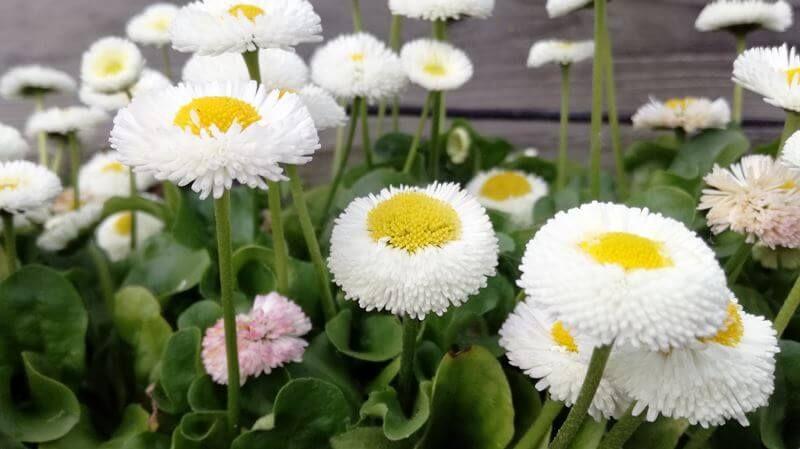 bloemen (2)