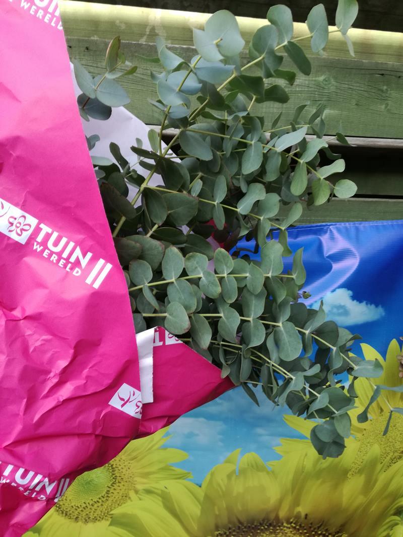 Keek Op De Week 9 Eucalyptus In De Douche Soesjes In De